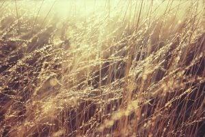 grass-835270_1920